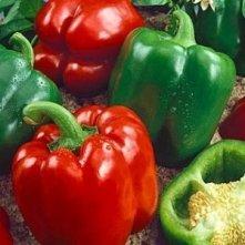 California Wonder, Pepper Plants.jpg